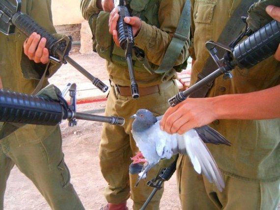 بكل فخر ..... انا فلسطيني .!  30143_396810331306_306817171306_4642193_324033_n